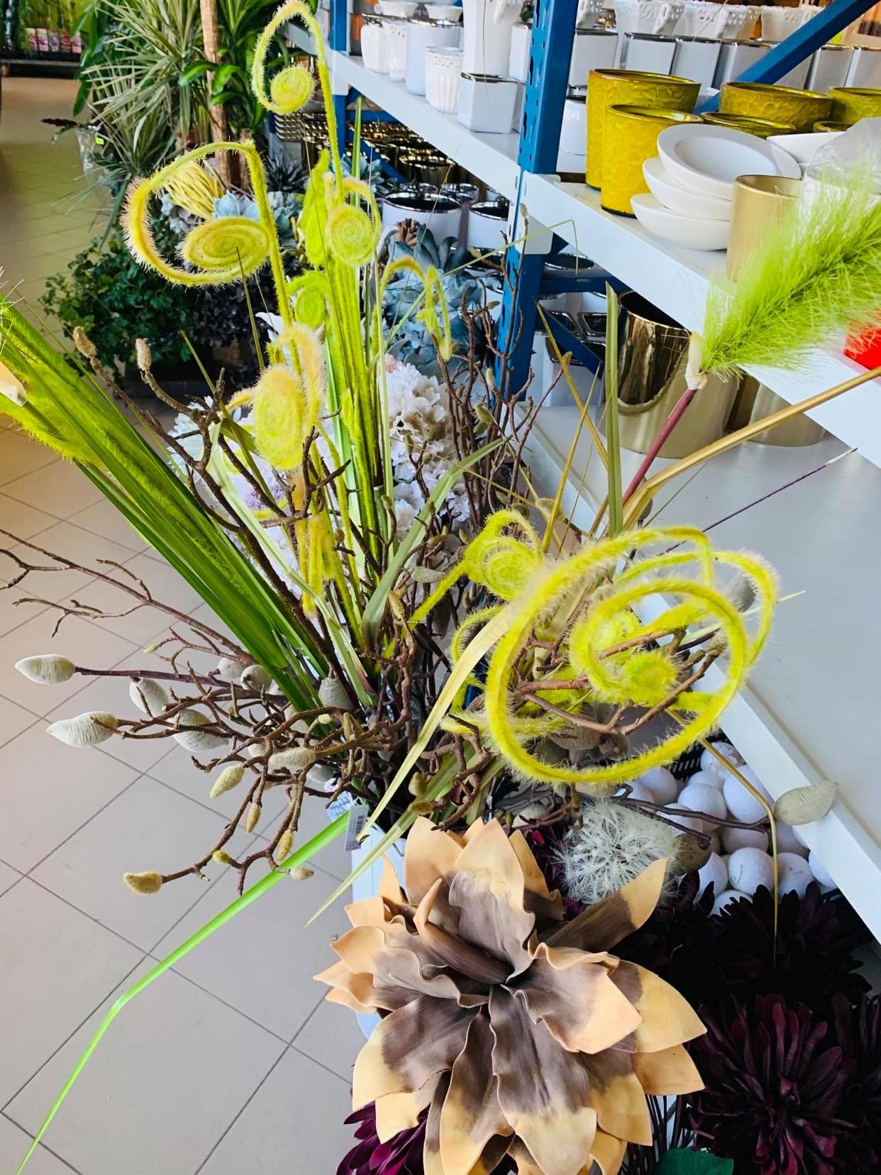 kwiaty egzotyczne zamość
